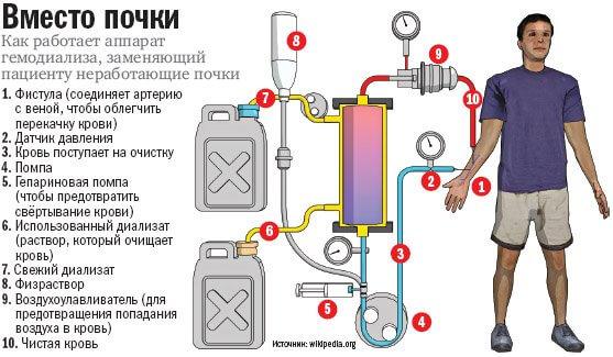 Обмен веществ при помощи аппарата