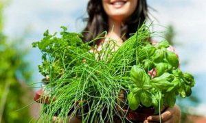 Зеленые травы