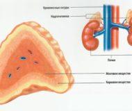 Опухоль надпочечников – какие бывают, диагностика и лечение