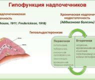 Как проявляется гипофункция и гиперфункция надпочечников?
