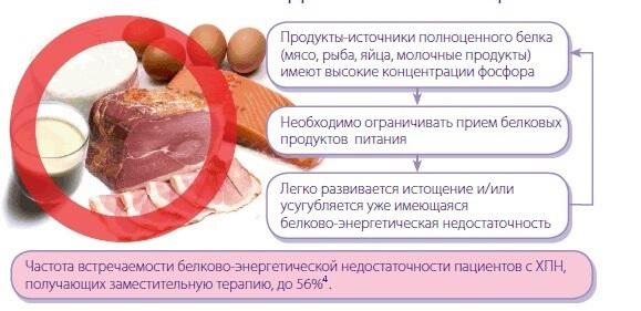 Какие продукты содержат много белка