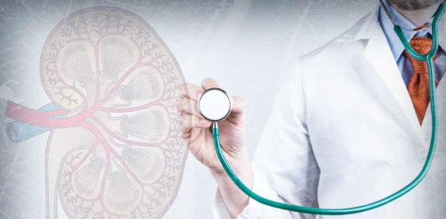 Нефролог занимается только болезнями почек