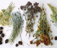 Использование целебных трав для лечения пиелонефрита