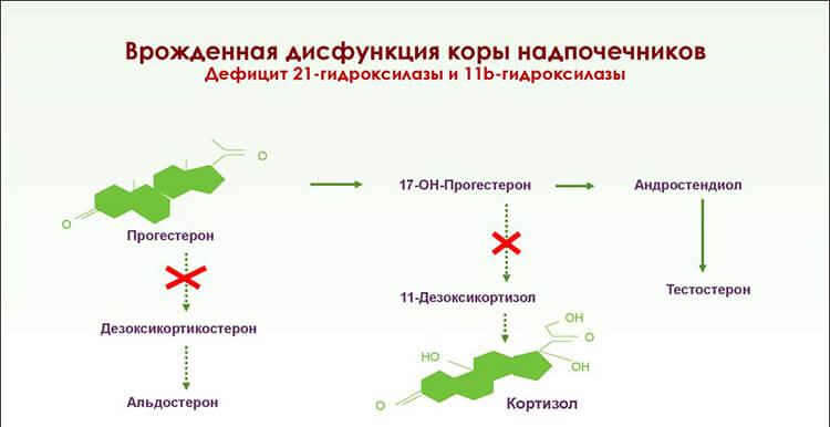 Дефицит вырабатываемых гормонов приводит к дисфункции