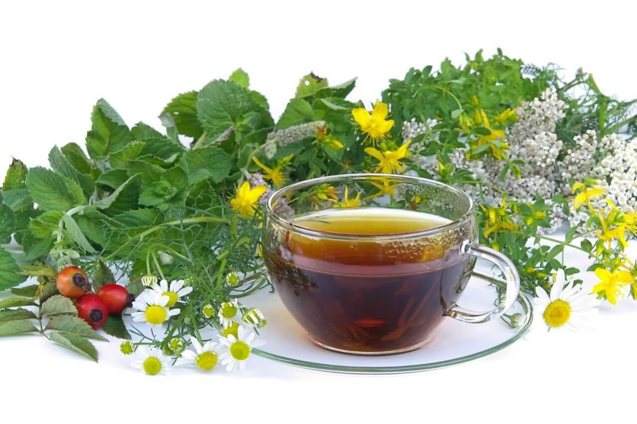 Настои из целебных трав могут выводить токсины из организма